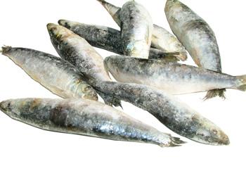 sardinhas-l.jpg
